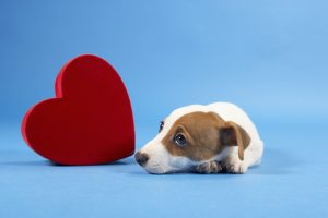 Dog with heart who is sad because his parents are on vacation